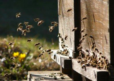 Bienenstock1HD