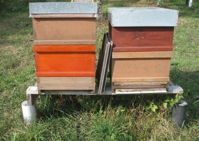 Bienenstock2HD
