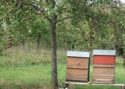 Bienenstock3HD