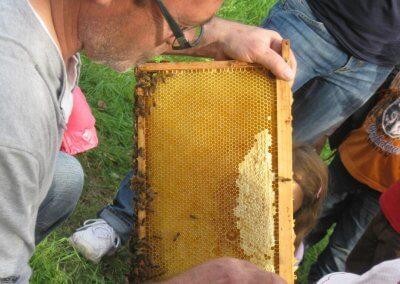 Bienenwabe8HD