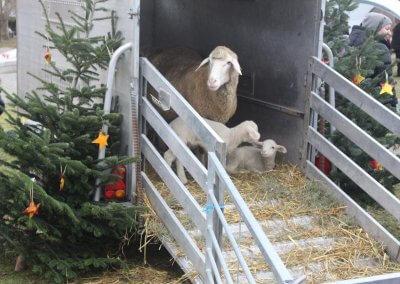 WeihnachtsmarktKids (7)HD